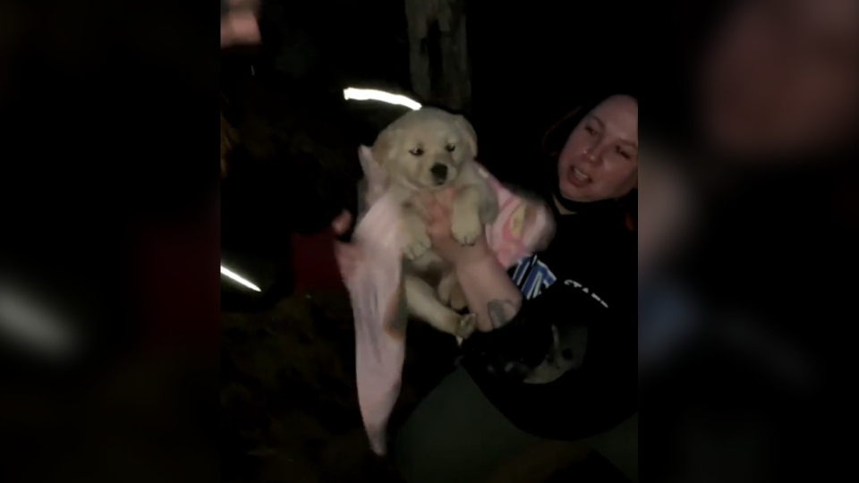 Manitoba Underdogs Rescue found a litter of 10 puppies living in a hole at a dump in a northern community on April 2, 2021. (Submitted: Manitoba Underdogs Rescue)