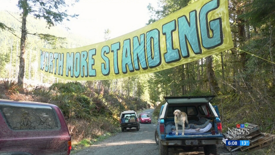 Fairy Creek protesters served with injunction