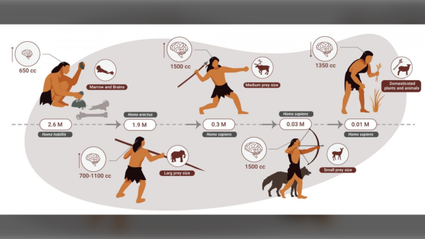 Stone-age humans ate mostly meat and specialized in hunting large animals, according to new research. (Miki Ben Dor)