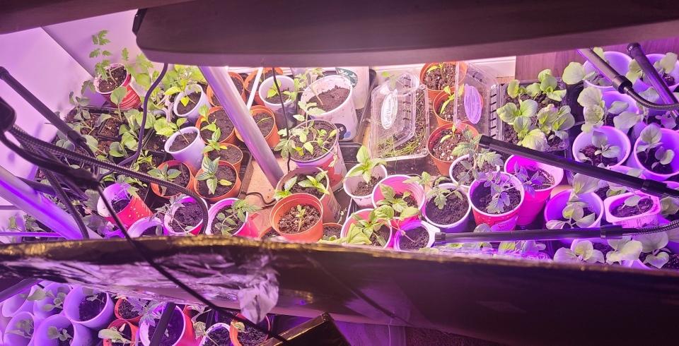 Instant Pot gardening