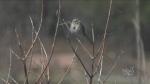 Safe Spring activity: birdwatching