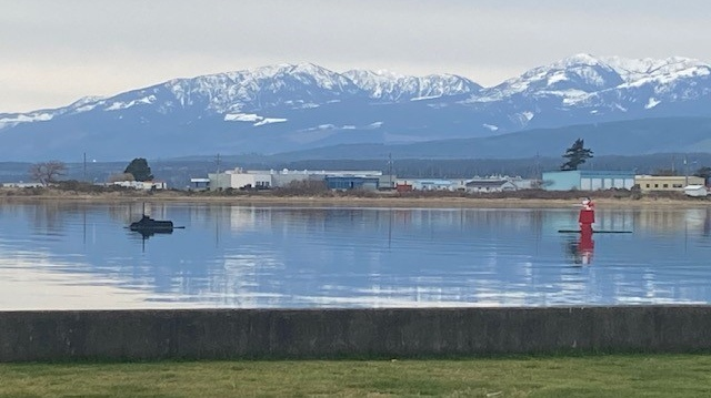The water display in Comox Bay is shown: (Harvey Grant)