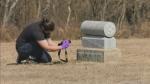 Scanning Saskatoon cemetery