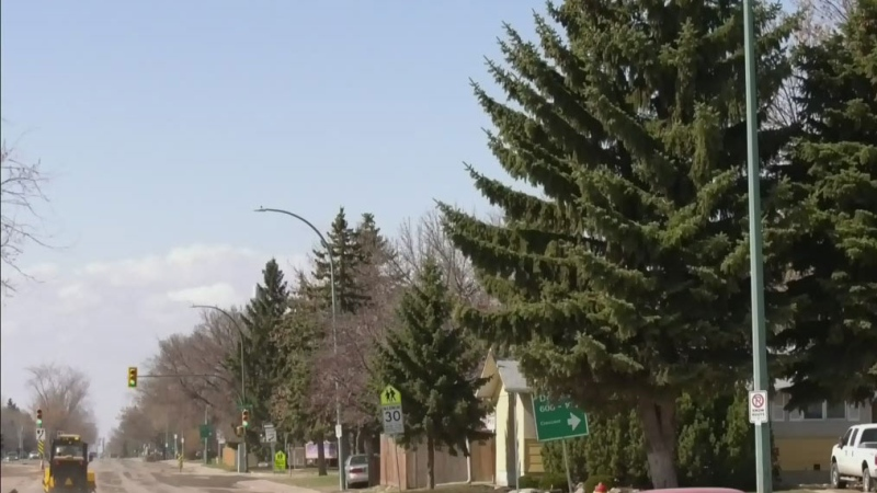 Concern over spruce trees