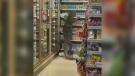 Enormous monitor lizard climbs shelf