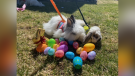 Picture This: All Things Easter