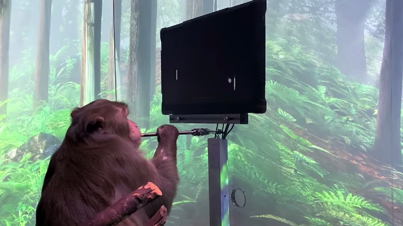 Neuralink, the implant company owned by SpaceX and Tesla CEO Elon Musk, has released a video in which a monkey appears to play the computer game Pong using only its mind. (Neuralink/Youtube)