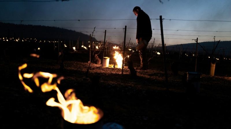 In the Chablis area of Burgundy, 80-90 percent of the vines have been damaged, says Frédéric Gueguen, a local federation official. (AFP)
