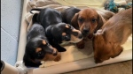 Breeder will appeal seizure of dogs