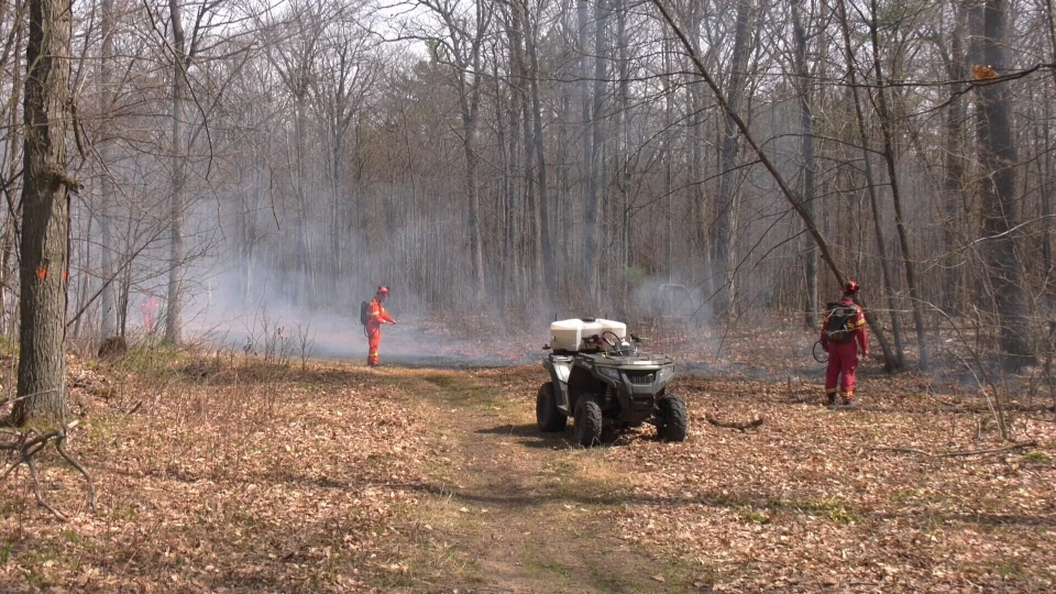 Foresters oversee a controlled burn in Adjala-Tosorontio on Sat. April 10, 2021 (Chris Garry/CTV News)