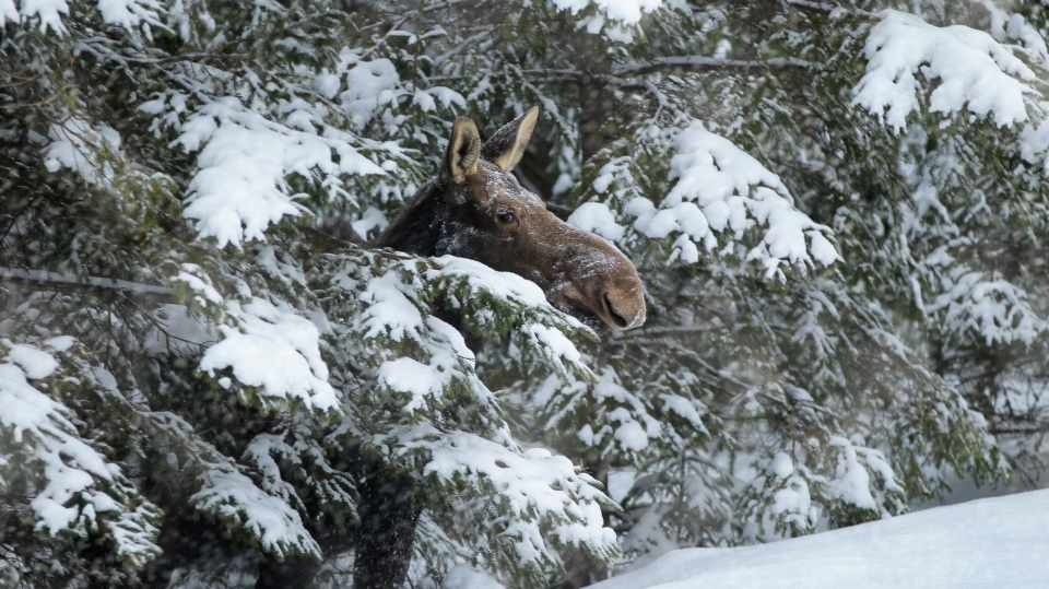 The former head of the WPS Major Crime Unit, Glenn Gervais, has turned to wildlife photography and nature to escape from career hardships. (courtesy Glenn Gervais)