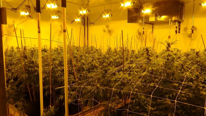 A cannabis grow op inside a commercial building on Marconi Court in Caledon, Ont. on Thurs. April 8, 2021 (Supplied)