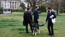 A handler walks Major, one of U.S. President Joe Biden and first lady Jill Biden's dogs, on the South Lawn of the White House in Washington, Wednesday, March 31, 2021. (Mandel Ngan/Pool via AP)