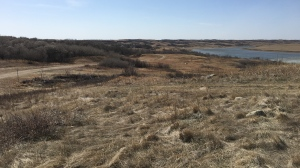 Kinookimaw, approximately 1,100 acres of land located West of Regina Beach, is pictured. (Taylor Rattray / CTV News Regina)