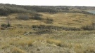 Group says camping is harming grassland