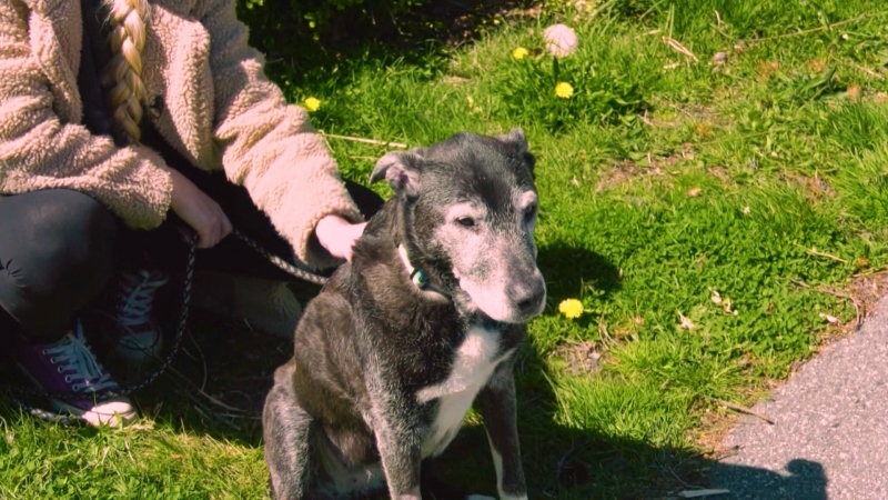 Lost senior dog reunited with family