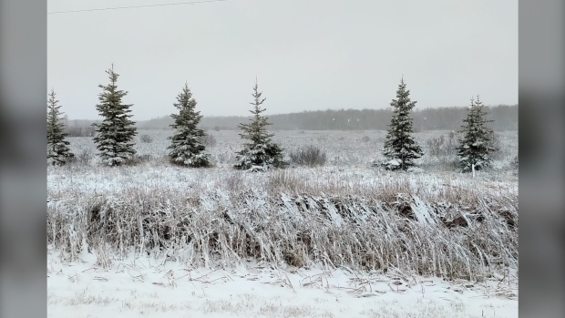 Dried reeds just east of Steinbach, Man. (Source: Kelly Loeppky)