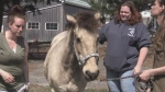 COVID-19 restrictions are taking their toll on several horse rescue organizations across the province.