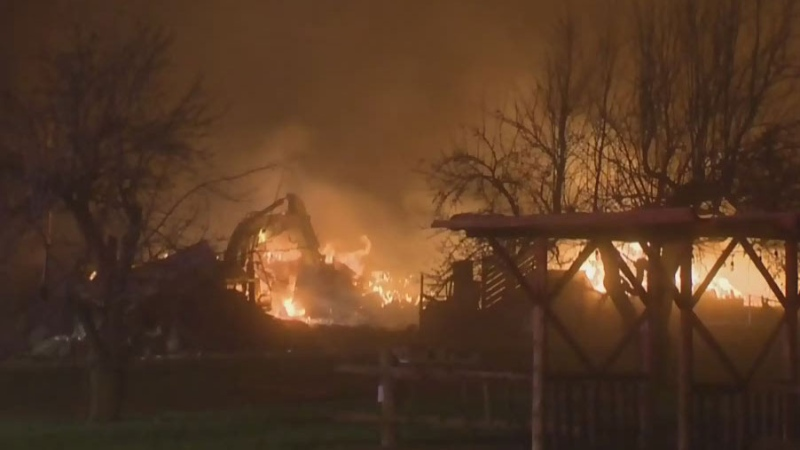 Cattle displaced in large barn fire