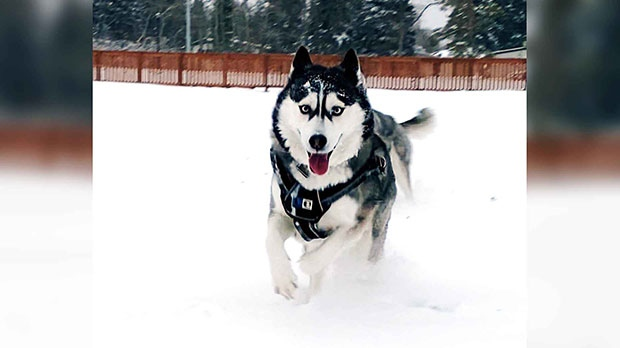 Echo having a grand time in the snow. Photo by James Norquay.