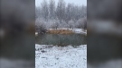 Spring snow at a pond south of Tolstoi. (Source: Lillian Fisher )