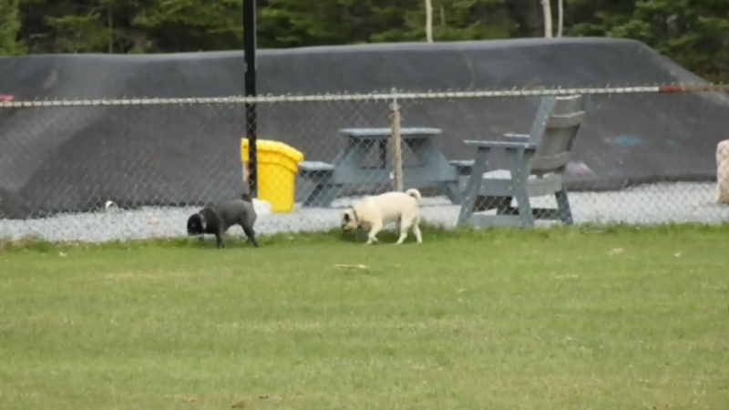 Dartmouth dog park