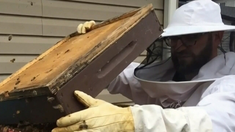 Pandemic hits Calgary  beekeepers