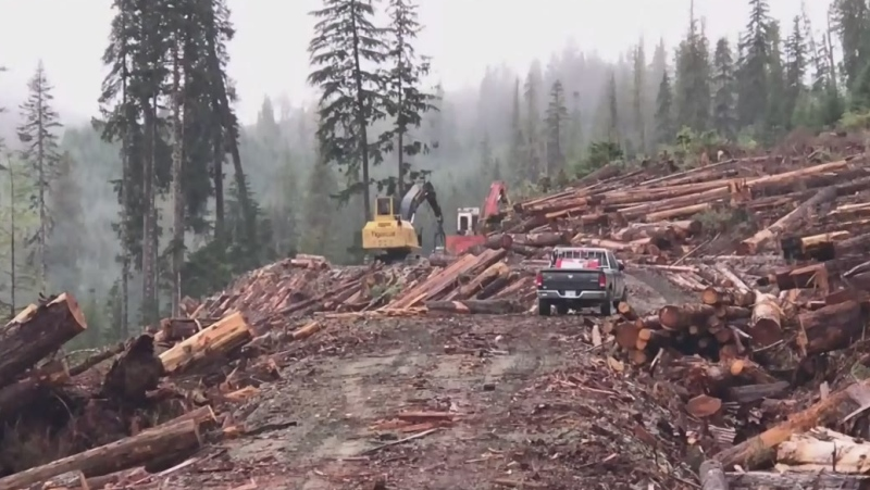The Forest Practices Board says the investigation stemmed from a 2018 complaint about BC Timber Sales licensees' logging of large old-growth trees in the Nahmint River watershed near Port Alberni. (CTV News)