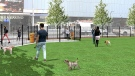 An interim dog park will be built next to Rogers Place this spring. (Ice District)