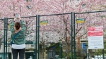 People take photographs of a fenced off cherry blossoms at a park during the COVID-19 pandemic in Toronto on Friday, May 1, 2020.  THE CANADIAN PRESS/Nathan Denette