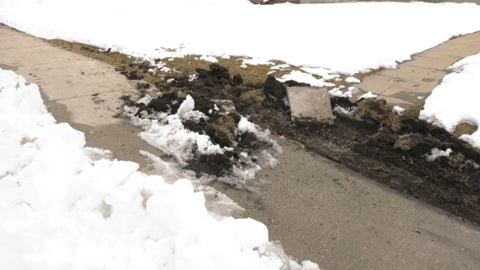 The City of Winnipeg said it has received 71 service requests about turf damage to 311 after a late snowstorm in mid-April 2021. (Source: CTV News Winnipeg)