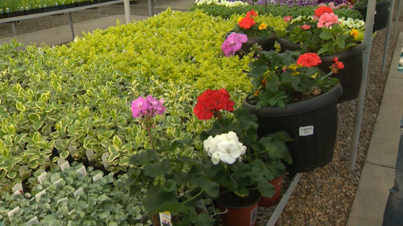 The experts at Golden Acre Home and Garden can help with flowers, pots, vegetables, and tree projects this spring