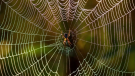Researchers are using artificial intelligence to interpret the sounds created by spiderwebs, to learn how spiders communicate.