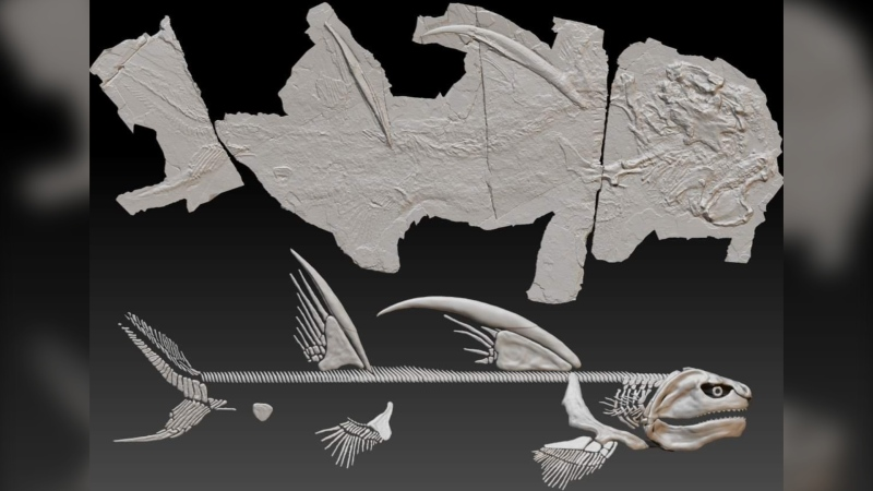 Scientists have named a 300-million-year-old 'Godzilla Shark' that was first discovered in New Mexico.  (Jesse Pruitt)