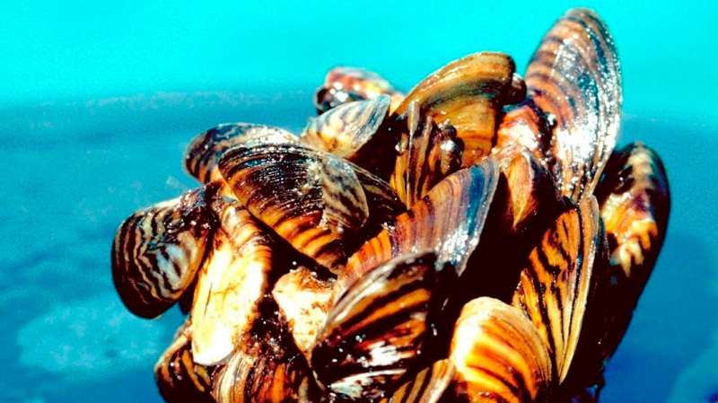 Invasive species experts in Atlantic Canada are warning fish enthusiasts and aquarium retailers to inspect their fish tanks after zebra mussels were found in moss balls across the region.