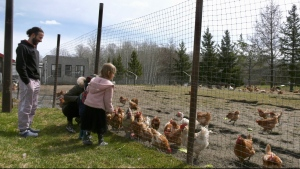 An early spring has meant Acres of Dreams Farm in Timmins has been able to start offering its open air markets since March. April 17/21  (Lydia Chubak/CTV News Northern Ontario)