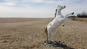 A unicorn statue, taken from the community of Delia, Alta. on Friday, was found Saturday morning in a field 15 kilometres away. (Supplied)