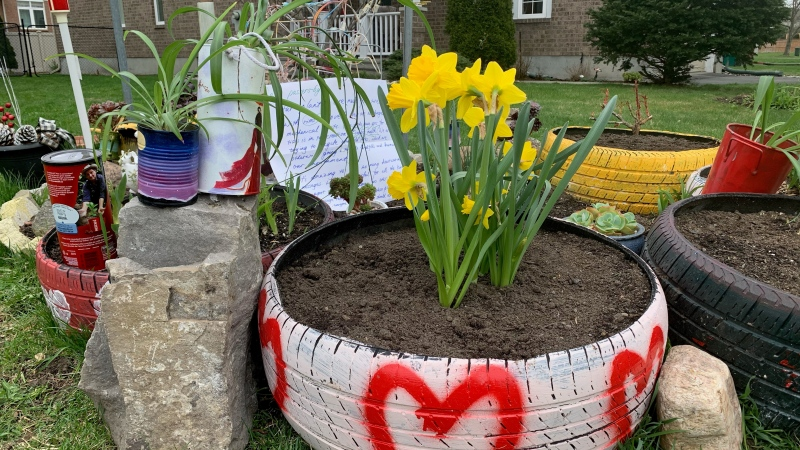 Riverside South resident Jamal Alsharif says Ottawa Bylaw told him to remove his front lawn garden after receiving a complaint. (Jackie Perez/CTV News Ottawa)