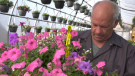 Steve Craine warns that there could be shortages of bedding plants for the second year in a row this season (CTV News Edmonton).