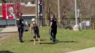 Two OPP officers stand near a young person at a Gravenhurst, Ont. skate park on Sun. April. 18, 2021 following an interaction. (Courtesy:@BrodieOHare/Instagram)