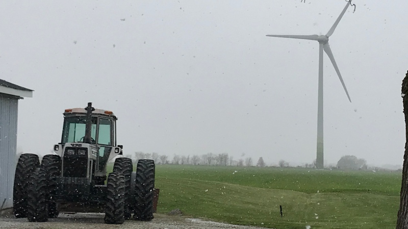 Snow falls at a farm in Essex County in Windsor, Ont. on Tuesday, April 20, 2021. (Michelle Maluske/CTV Windsor)