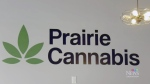 Sask. pot retailer looks to better future