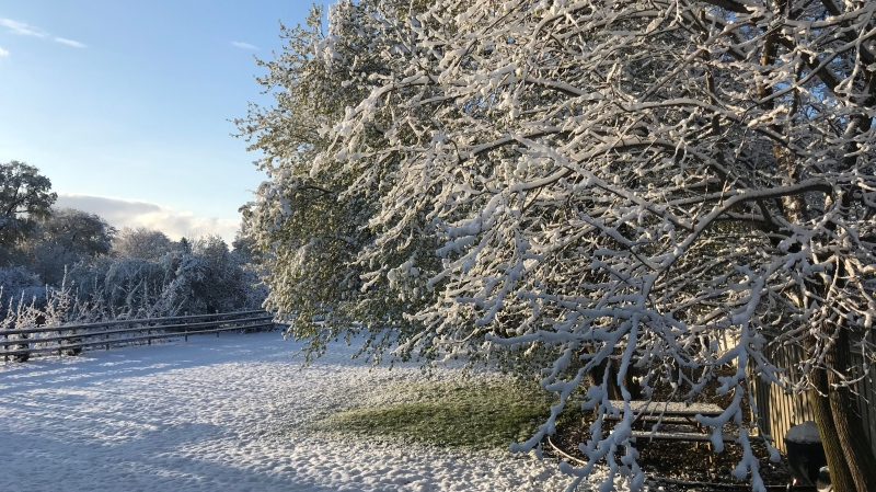 Snow covered trees and grass in Windsor, Ont., on Wednesday, April 21, 2021. (Michelle Maluske / CTV Windsor)