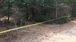 Yellow police tape blocks off a wooded area near Millar Hill Road in Lay of Bays after human remains were discovered. Wed. April 21, 2021 (Rob Cooper/CTV News)