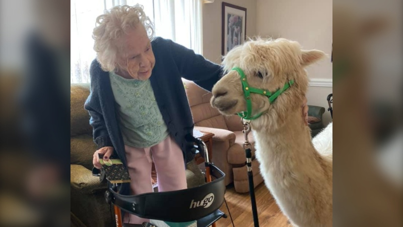 A resident of Grass Home poses with a llama. (Photo: Facebook/Grass Home at 774)