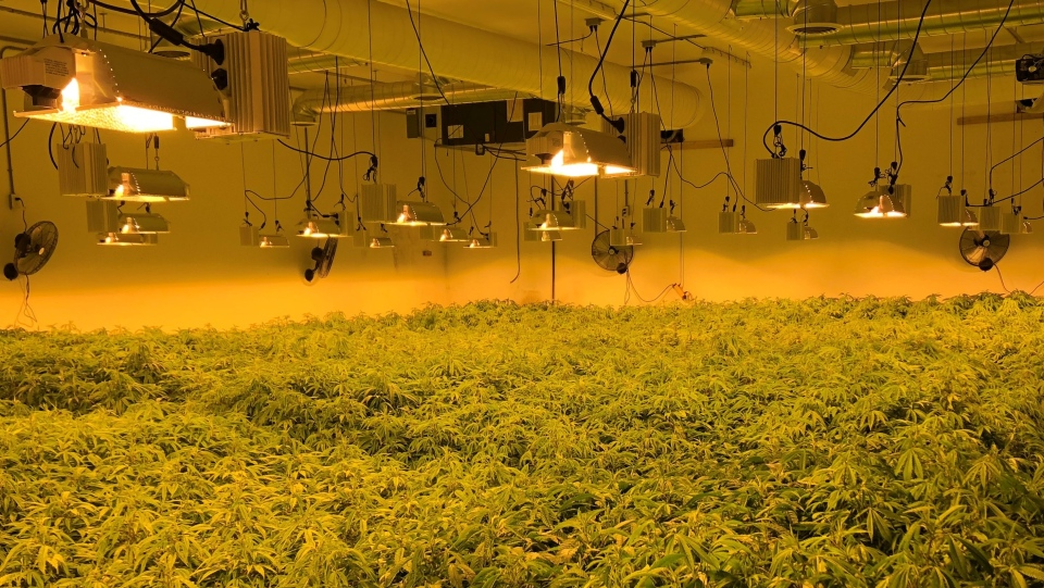 Southern Georgian Bay allege they located a mass cannabis grow-op on a farm in Tiny Township on Tues. April 20, 2021 (Supplied)