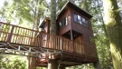 The treehouse opened to guests on April 1, 2021: (CTV News)