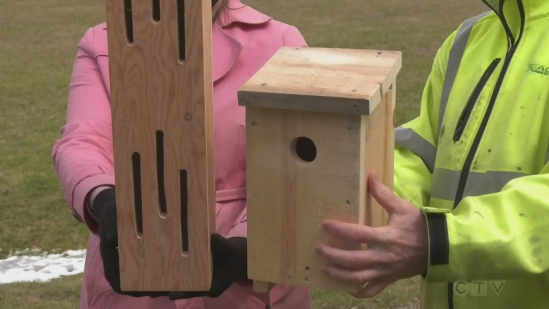 New bird and butterfly houses go up in Timmins