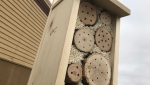 Goodwill shows off new bee hotel. (CTV News Edmonton)