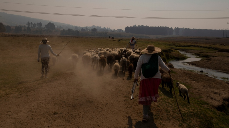 Shepherds walk with their flock along the banks of the Villa Victoria Dam, the main water supply for Mexico City residents, on the outskirts of Toluca, Mexico, Thursday, April 22, 2021. (AP Photo/Fernando Llano)